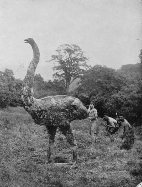 03-07 Гиганская птица Моа обитавшая в Новой зеландии до прихода цивилизации Птица вымерла имела рост 3,7м и весил 230кг