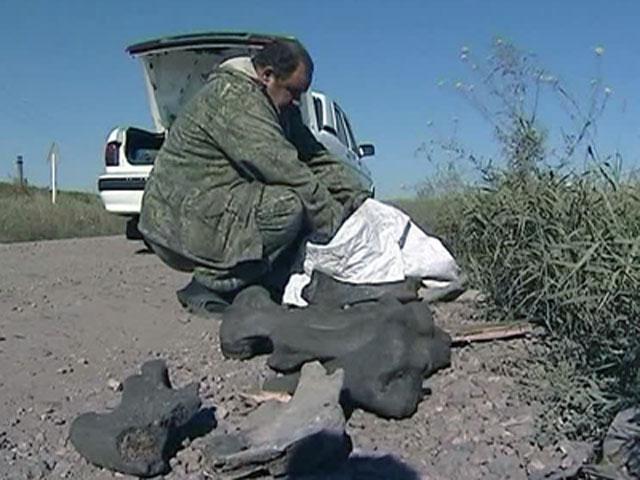 Бизнес против науки экскаваторщика уволили за доисторическую находку бизон