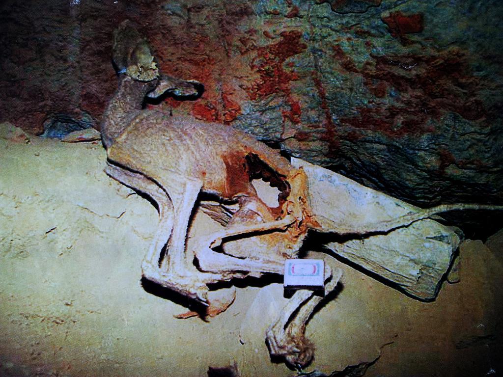 В пещере Горомын Агы найдено останки неизвестного животного. - Пещера Горомын Агы конце января 2007 года Окинский район Бурятии